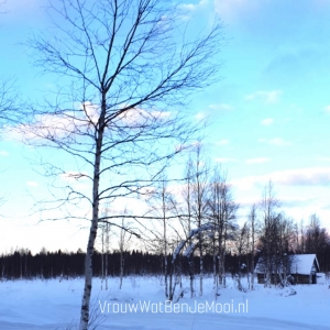 Huskeytocht in Lapland sneeuwvlakte